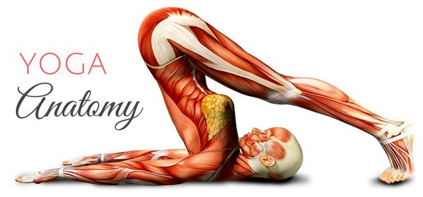 giải phẫu học yoga