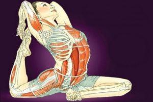 Giải phẫu học và sinh lý trong Yoga
