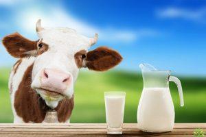 Uống sữa bò để tăng canxi hay gây loãng xương???