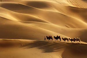 ngựa và lạc đà